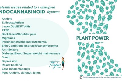 Endocannabinoid System…an amazing-overlooked-body system!